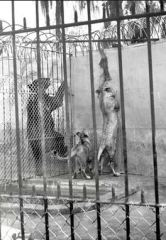 Previously, zoo conditions were often nothing better than animal pits (Photo: Tampa Bay Times)